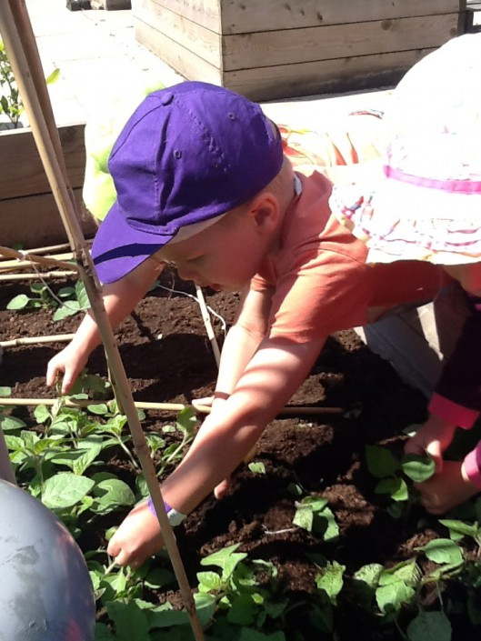 Planting Vegetables on the Roof Garden